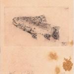 lil fish kleiner